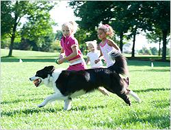 Pet Stop Advance Training