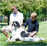 Pet Stop Dog Fencing - Safe, Happy Pets
