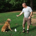 Pet Stop Dog Fencing Experts